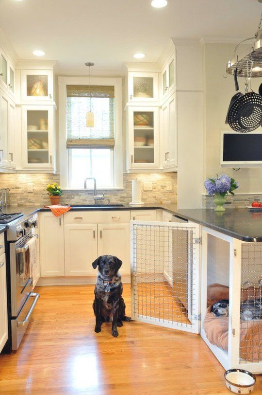 Pet-Friendly Home Designs - Hatchett Design/Remodel