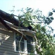 Tree fallen on roof